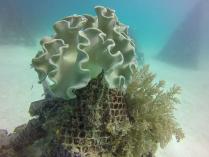 beautiful corals in Sipadan